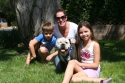 Trooper found his forever family - will you open your heart and home to a bulldog in need?